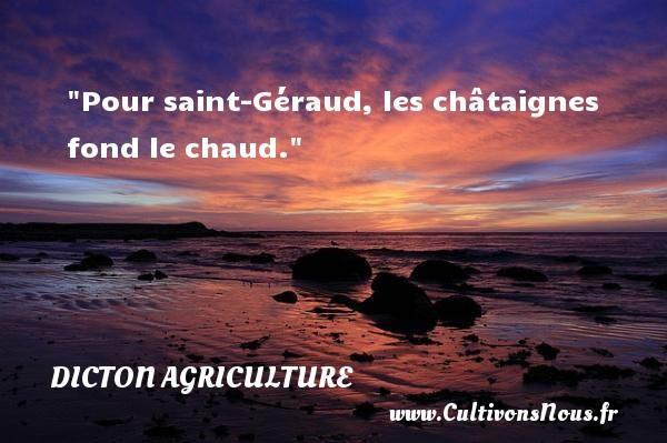 Pour saint-Géraud, les châtaignes fond le chaud. Un dicton agriculture