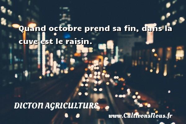 Quand octobre prend sa fin, dans la cuve est le raisin. Un dicton agriculture