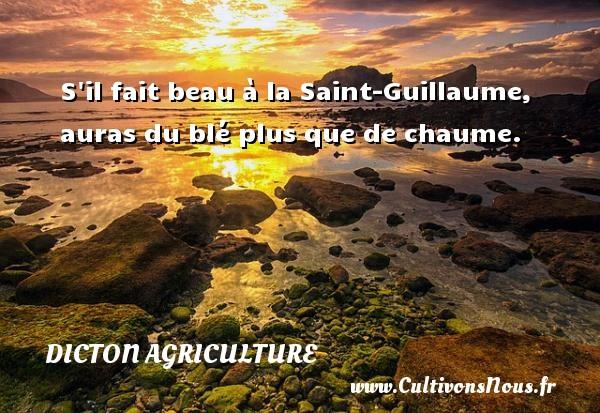 S il fait beau à la Saint-Guillaume, auras du blé plus que de chaume. Un dicton agriculture
