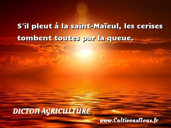 S il pleut à la saint-Maïeul, les cerises tombent toutes par la queue. Un dicton agriculture DICTON AGRICULTURE - Dicton agriculture
