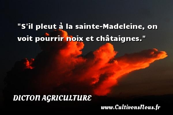 S il pleut à la sainte-Madeleine, on voit pourrir noix et châtaignes. Un dicton agriculture
