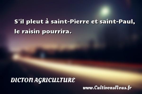 S il pleut à saint-Pierre et saint-Paul, le raisin pourrira. Un dicton agriculture