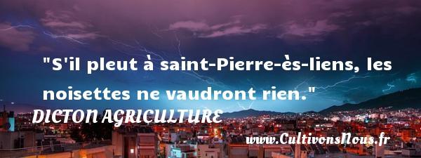 S il pleut à saint-Pierre-ès-liens, les noisettes ne vaudront rien. Un dicton agriculture