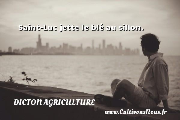 Saint-Luc jette le blé au sillon. Un dicton agriculture