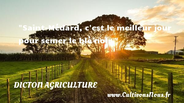 Saint-Médard, c est le meilleur jour pour semer le blé noir. Un dicton agriculture