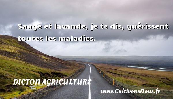 Dicton agriculture - Sauge et lavande, je te dis, guérissent toutes les maladies. Un dicton agriculture DICTON AGRICULTURE