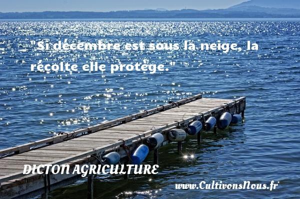 Si décembre est sous la neige, la récolte elle protège. Un dicton agriculture