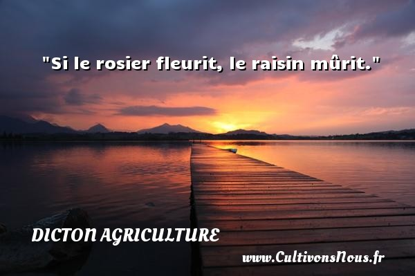 Si le rosier fleurit, le raisin mûrit. Un dicton agriculture