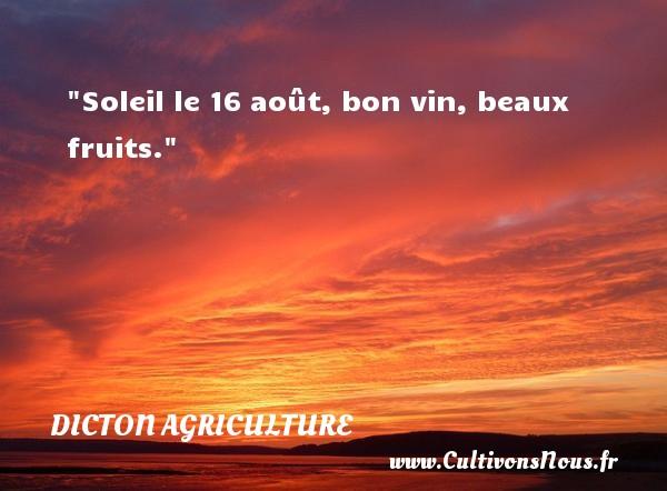 Soleil le 16 août, bon vin, beaux fruits. Un dicton agriculture