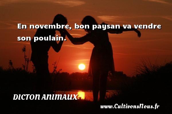 Dicton animaux - En novembre, bon paysan va vendre son poulain. Un dicton animaux DICTON ANIMAUX