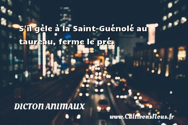 S il gèle à la Saint-Guénolé au taureau, ferme le pré. Un dicton animaux