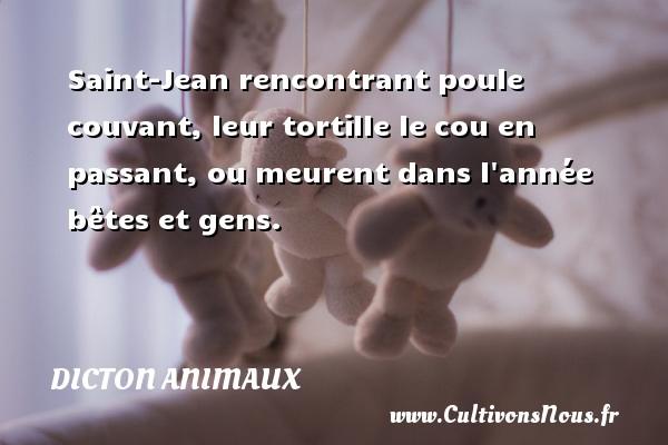 Dicton animaux - Saint-Jean rencontrant poule couvant, leur tortille le cou en passant, ou meurent dans l année bêtes et gens. Un dicton animaux DICTON ANIMAUX