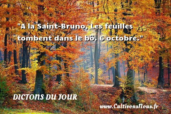 A la Saint-Bruno, Les feuilles tombent dans le bô. 6 octobre. Un dicton français DICTONS DU JOUR