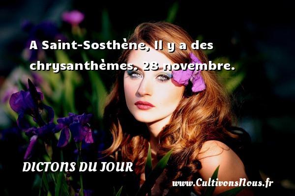 A Saint-Sosthène, Il y a des chrysanthèmes.  28 novembre. Un dicton français DICTONS DU JOUR