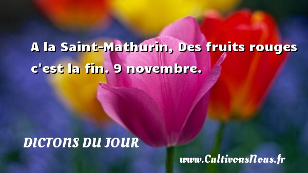 A la Saint-Mathurin, Des fruits rouges c est la fin. 9 novembre. Un dicton français DICTONS DU JOUR