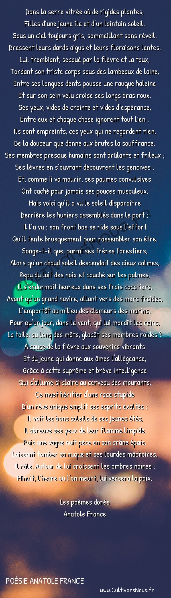 Poésie Anatole France - Les Poèmes dorés - La Mort du singe -  Dans la serre vitrée où de rigides plantes, Filles d'une jeune île et d'un lointain soleil,