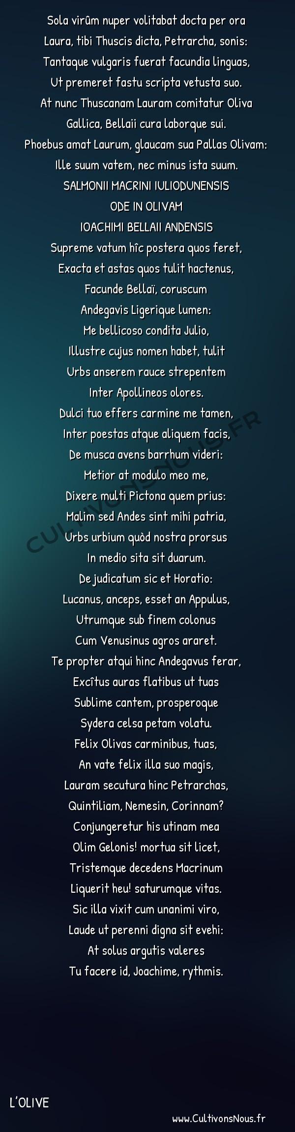 Poésie Joachim Du Bellay - L'Olive - AURATUS IN OLIVAM -  Sola virûm nuper volitabat docta per ora Laura, tibi Thuscis dicta, Petrarcha, sonis:
