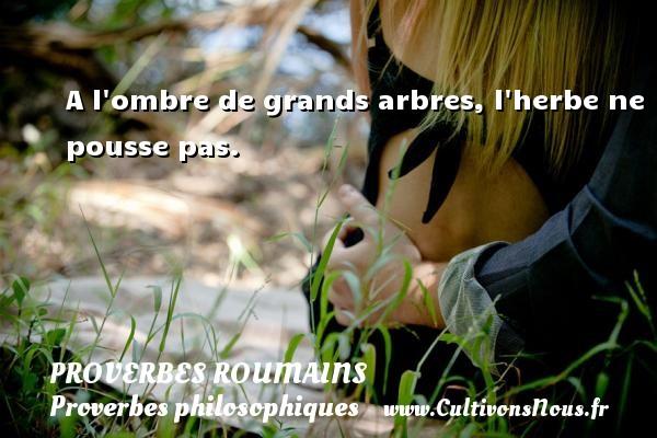 Proverbes roumains - Proverbes philosophiques - A l ombre de grands arbres, l herbe ne pousse pas. Un Proverbe roumain PROVERBES ROUMAINS