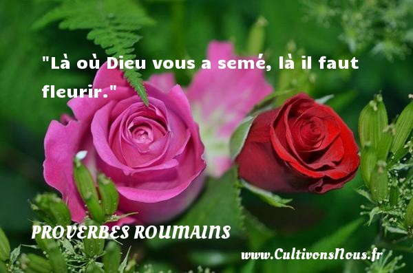 Là où Dieu vous a semé, là il faut fleurir. Un Proverbe roumain PROVERBES ROUMAINS