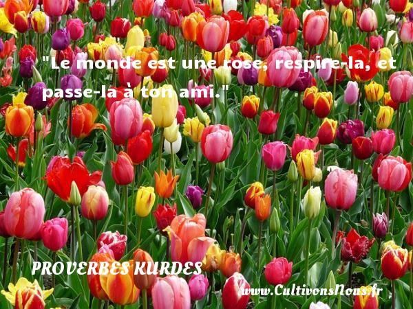 Proverbes kurdes - Proverbe rose - Le monde est une rose, respire-la, et passe-la à ton ami. Un proverbe kurde PROVERBES KURDES