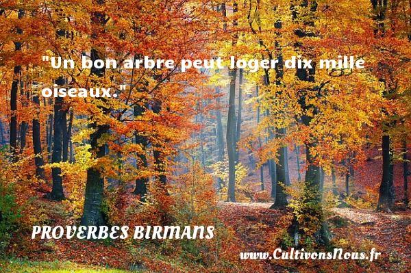 Un bon arbre peut loger dix mille oiseaux. Un proverbe birman PROVERBES BIRMANS