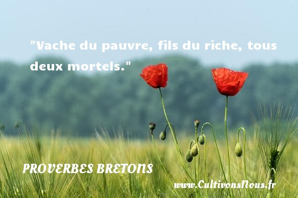 Proverbes bretons - Vache du pauvre, fils du riche, tous deux mortels. Un proverbe breton PROVERBES BRETONS