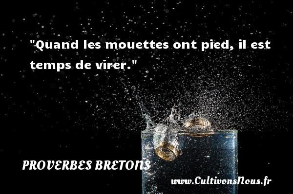 Proverbes bretons - Proverbes temps - Quand les mouettes ont pied, il est temps de virer. Un proverbe breton PROVERBES BRETONS
