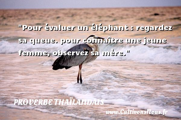 Proverbes thaïlandais - Proverbe regard - Pour évaluer un éléphant : regardez sa queue. pour connaître une jeune femme, observez sa mère. Un proverbe thaïlandais PROVERBES THAÏLANDAIS
