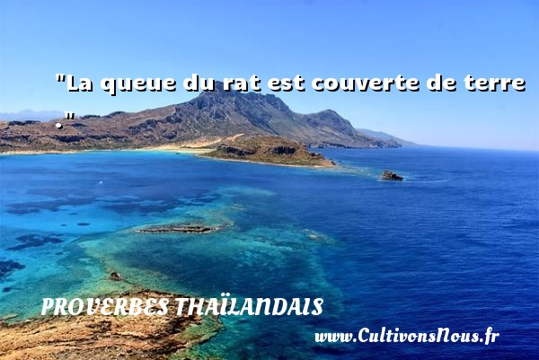 Proverbes thaïlandais - La queue du rat est couverte de terre . Un proverbe thaïlandais PROVERBES THAÏLANDAIS