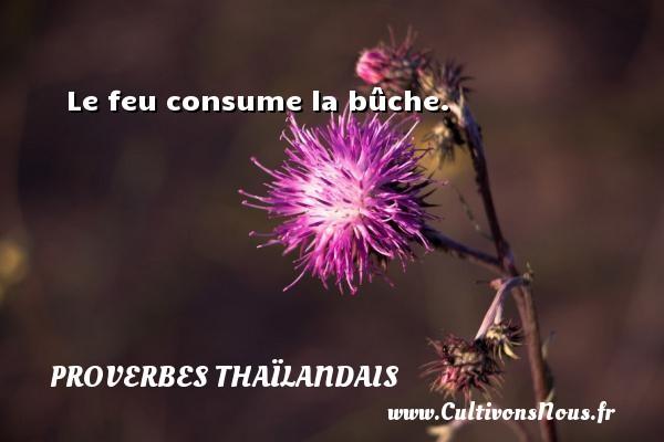 Proverbes thaïlandais - Le feu consume la bûche. Un proverbe thaïlandais PROVERBES THAÏLANDAIS