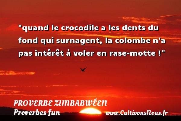 Proverbes zimbabwéens - Proverbes fun - quand le crocodile a les dents du fond qui surnagent, la colombe n a pas intérêt à voler en rase-motte ! Un proverbe zimbabwéen PROVERBES ZIMBABWÉENS