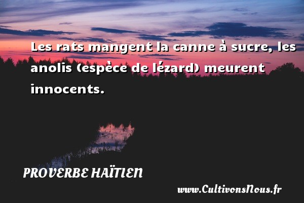 Les rats mangent la canne à sucre, les anolis (espèce de lézard) meurent innocents. Un proverbe haïtien PROVERBE HAÏTIEN