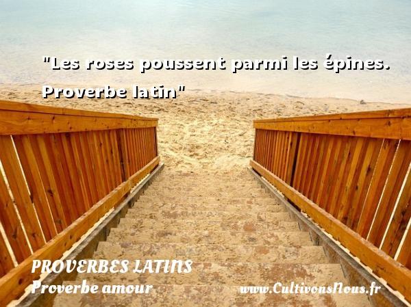 Proverbes latins - Proverbe amour - Les roses poussent parmi les épines.   Proverbe latin   Un proverbe sur l amour PROVERBES LATINS