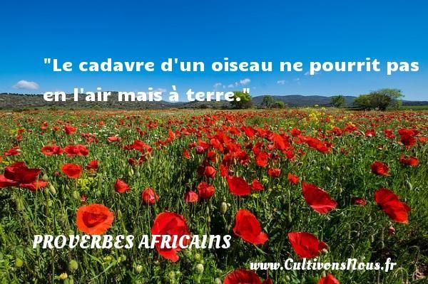 Proverbes africains - Le cadavre d un oiseau ne pourrit pas en l air mais à terre.  Un proverbe africain PROVERBES AFRICAINS