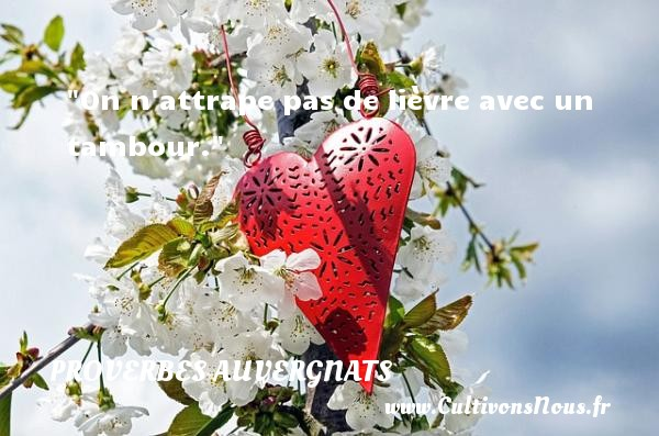 Proverbes - Proverbes auvergnats - On n attrape pas de lièvre avec un tambour.   Un proverbe auvergnat PROVERBES AUVERGNATS