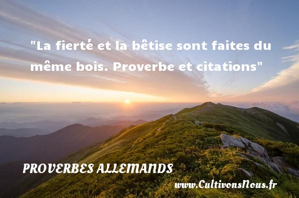 Proverbes allemands - Proverbe bêtise - La fierté et la bêtise sont faites du même bois.  Proverbe et citations Un proverbe allemand PROVERBES ALLEMANDS