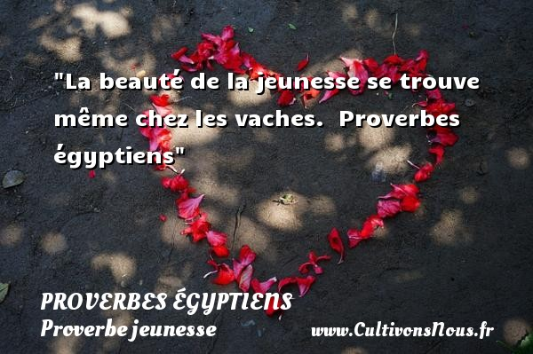 Proverbes égyptiens - Proverbe jeunesse - La beauté de la jeunesse se trouve même chez les vaches.   Proverbes égyptiens   Un proverbe sur la jeunesse PROVERBES ÉGYPTIENS