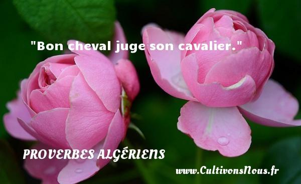 Bon cheval juge son cavalier. Un Proverbe Algérien PROVERBES ALGÉRIENS - Proverbes Algériens - Proverbes philosophiques