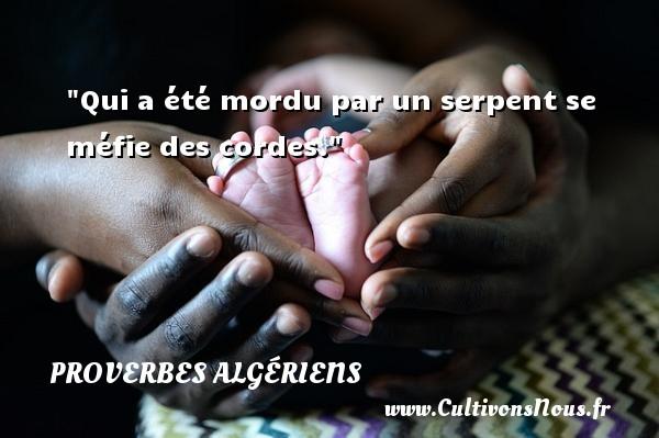 Qui a été mordu par un serpent se méfie des cordes. Un Proverbe Algérien PROVERBES ALGÉRIENS - Proverbes Algériens - Proverbes philosophiques