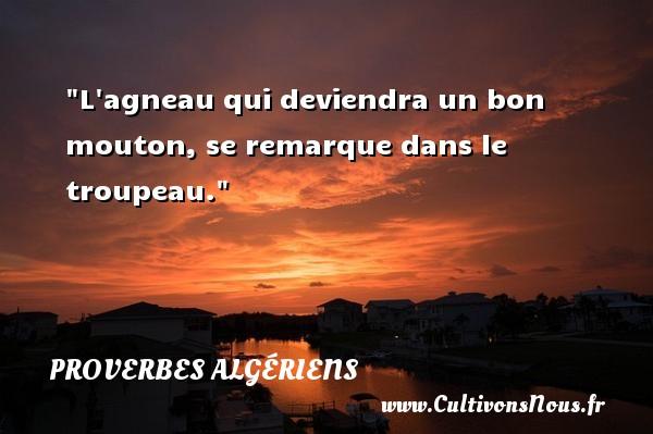 L agneau qui deviendra un bon mouton, se remarque dans le troupeau. Un Proverbe Algérien PROVERBES ALGÉRIENS - Proverbes Algériens - Proverbes philosophiques