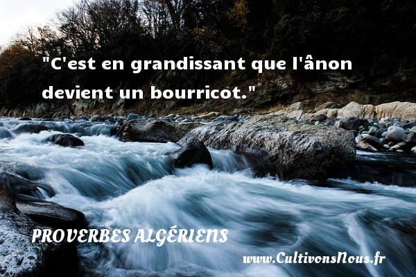 C est en grandissant que l ânon devient un bourricot. Un Proverbe Algérien PROVERBES ALGÉRIENS - Proverbes Algériens - Proverbes philosophiques