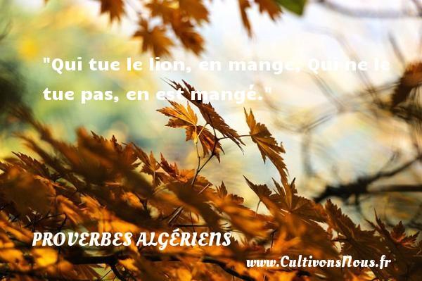 Proverbes Algériens - Proverbes philosophiques - Qui tue le lion, en mange, Qui ne le tue pas, en est mangé. Un Proverbe Algérien PROVERBES ALGÉRIENS