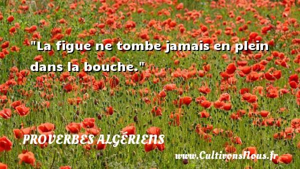 La figue ne tombe jamais en plein dans la bouche. Un Proverbe Algérien PROVERBES ALGÉRIENS - Proverbes Algériens - Proverbes philosophiques