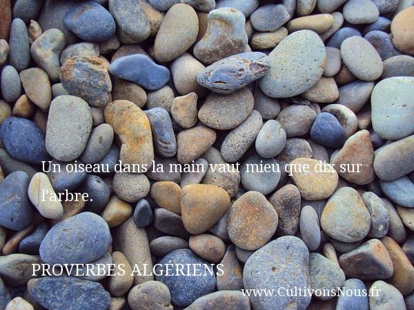 Un oiseau dans la main vaut mieu que dix sur l arbre.  Un Proverbe Algérien PROVERBES ALGÉRIENS - Proverbes Algériens - Proverbes connus
