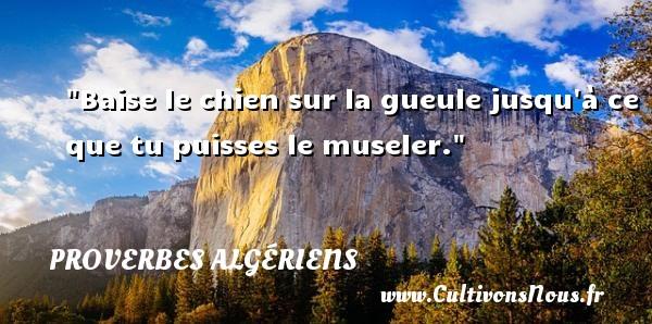 Baise le chien sur la gueule jusqu à ce que tu puisses le museler.  Un Proverbe Algérien PROVERBES ALGÉRIENS - Proverbes Algériens - Proverbes philosophiques