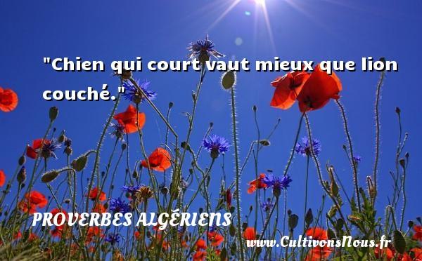 Chien qui court vaut mieux que lion couché.  Un Proverbe Algérien PROVERBES ALGÉRIENS - Proverbes Algériens - Proverbes philosophiques