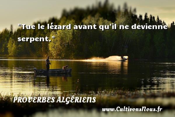 Tue le lézard avant qu il ne devienne serpent.  Un Proverbe Algérien PROVERBES ALGÉRIENS - Proverbes Algériens - Proverbes philosophiques
