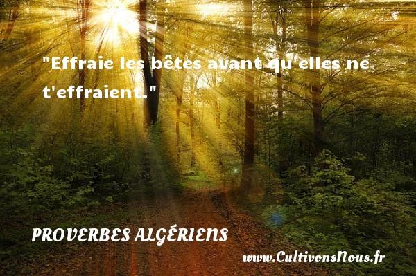 Effraie les bêtes avant qu elles ne t effraient.  Un Proverbe Algérien PROVERBES ALGÉRIENS - Proverbes Algériens - Proverbes philosophiques