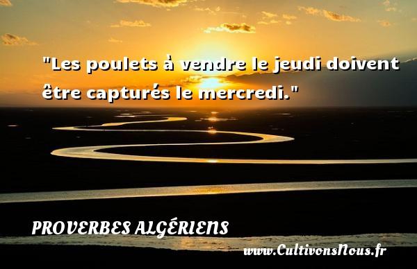 Les poulets à vendre le jeudi doivent être capturés le mercredi.  Un Proverbe Algérien PROVERBES ALGÉRIENS - Proverbes Algériens - Proverbes philosophiques