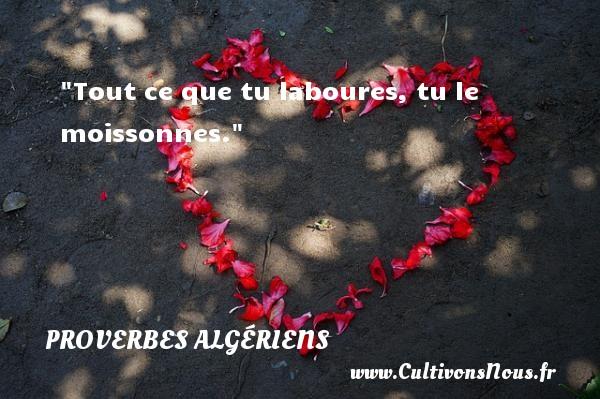 Tout ce que tu laboures, tu le moissonnes.  Un Proverbe Algérien PROVERBES ALGÉRIENS - Proverbes Algériens - Proverbes philosophiques